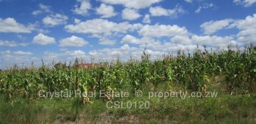 Stands & Residential Land for Sale in Kambuzuma